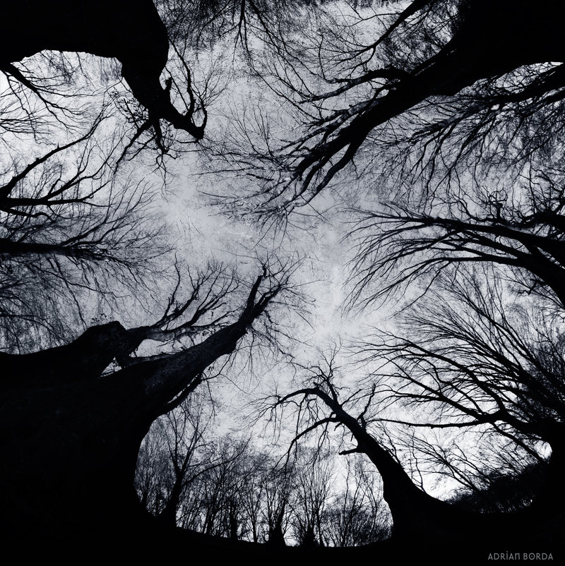 creepy forest picture looking up